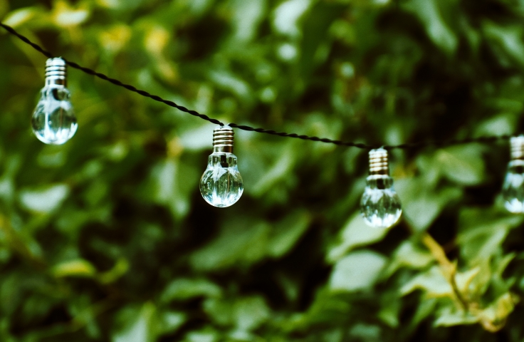 Lightbulb in front of greenery